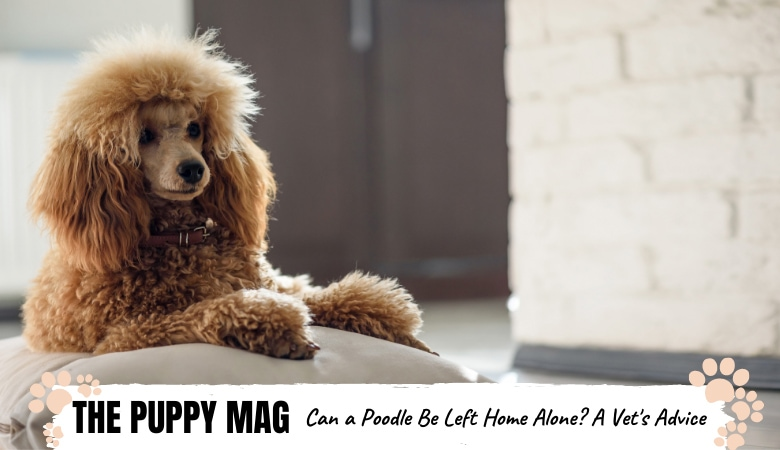 How Long Can Poodles Be Left Alone? Tips For Every Owner