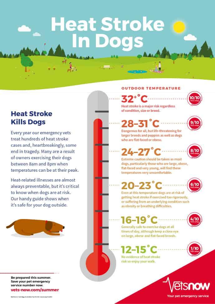 berner-hot-weather