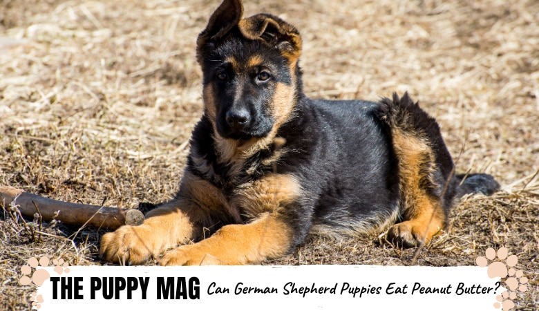 Can German Shepherd Puppies Eat Peanut Butter?