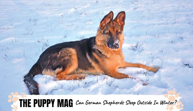 Can German Shepherds Sleep Outside In Winter? Must Read!