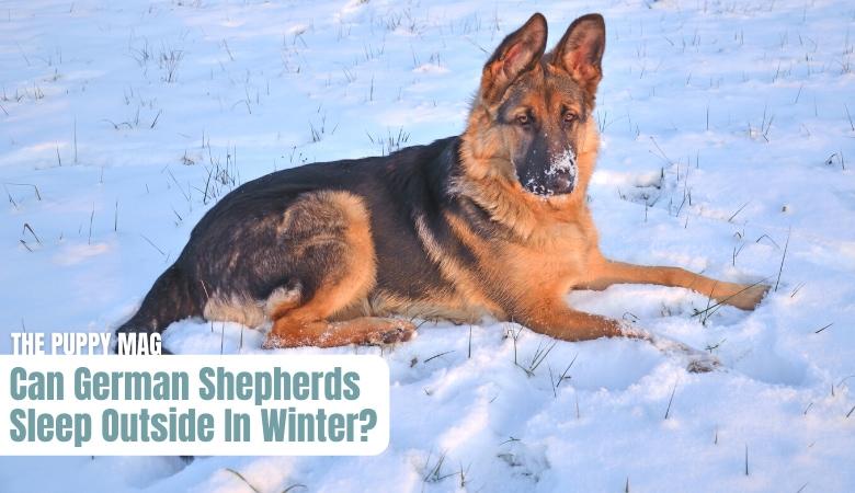 can-german-shepherds-sleep-outside-in-winter