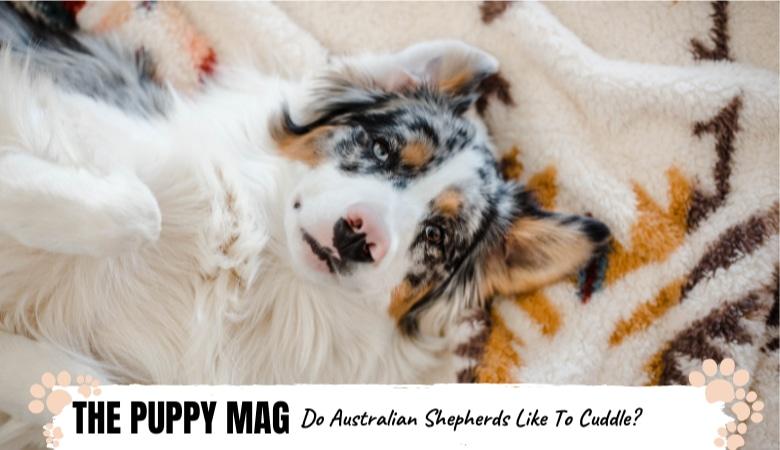 do-australian-shepherds-like-to-cuddle