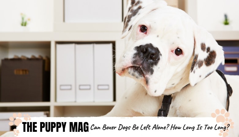 Can Boxer Dogs Be Left Alone? 5 Tips Owners Should Know