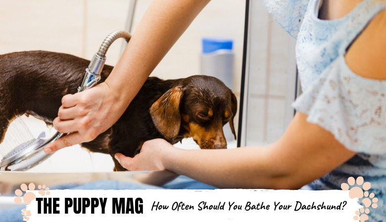 How Often Should You Bathe A Dachshund? Top Bathing Tips