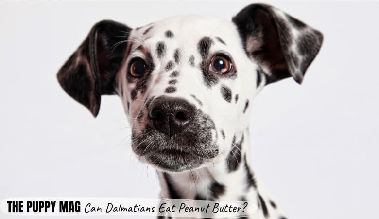 Can Dalmatians Eat Peanut Butter? Simple Safety Tips