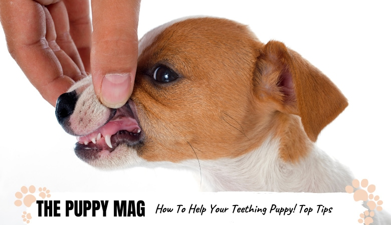 how-to-help-teething-puppy