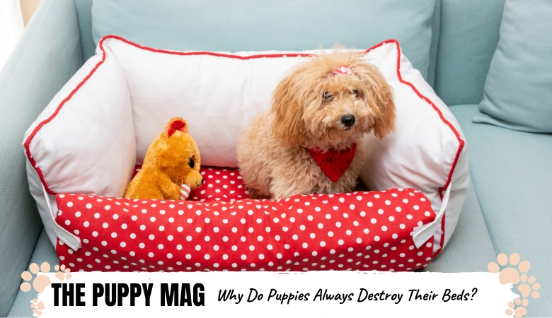 why-do-puppies-destroy-their-beds
