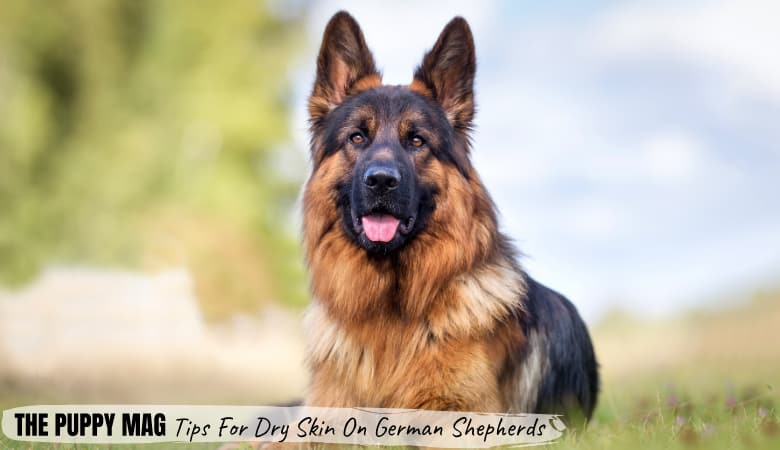 Why Does My German Shepherd Have Dry Skin? 5 Main Causes