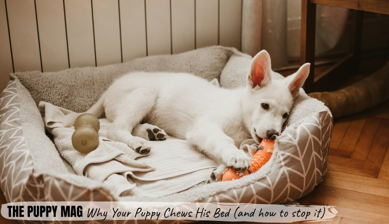 why-puppies-destroy-their-beds