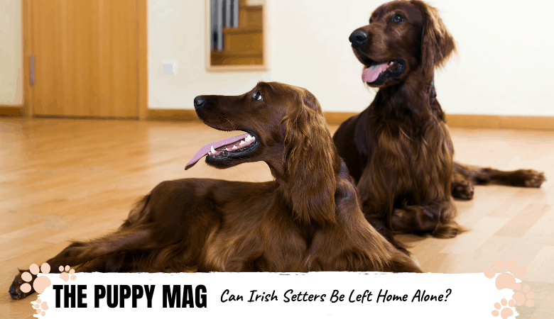 Can irish setters be left home alone