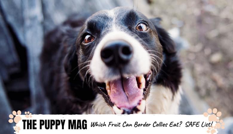 Can Border Collies Eat Fruit? Safe + Unsafe Fruit List