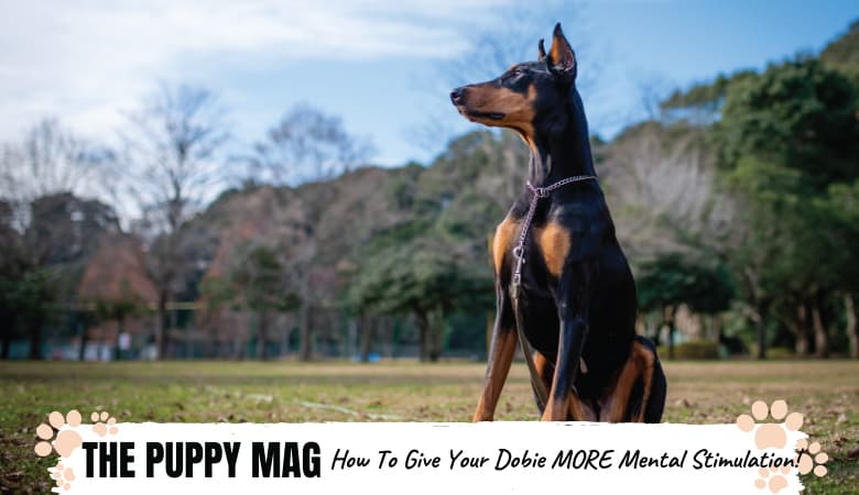 8 Fun Ways To Give Your Doberman More Mental Stimulation