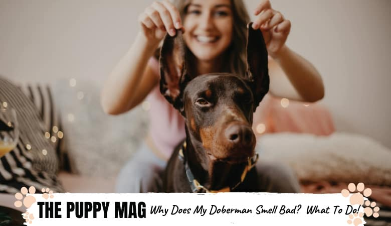 Why Your Doberman Smells So Bad: 6 Reasons & What To Do