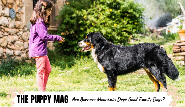 7 Reasons Why Bernese Mountain Dogs Are Great For Families