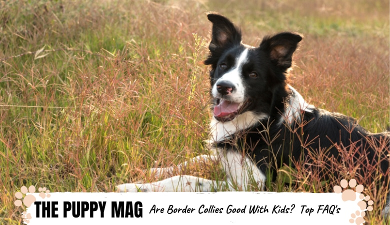 Are Border Collies Good With Kids? FAQ's For Parents
