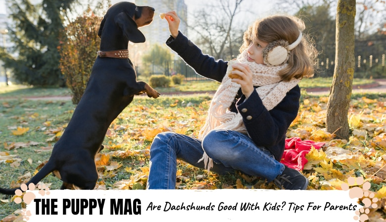 are-dachshunds-good-with-kids.png