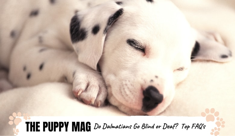 Do Dalmatians Go Blind or Deaf? The Full Answer + FAQs