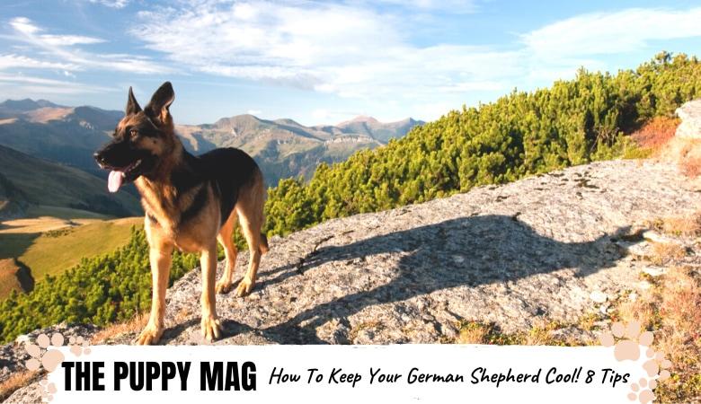 keep-your-German-Shepherd-cool-in-summer.png