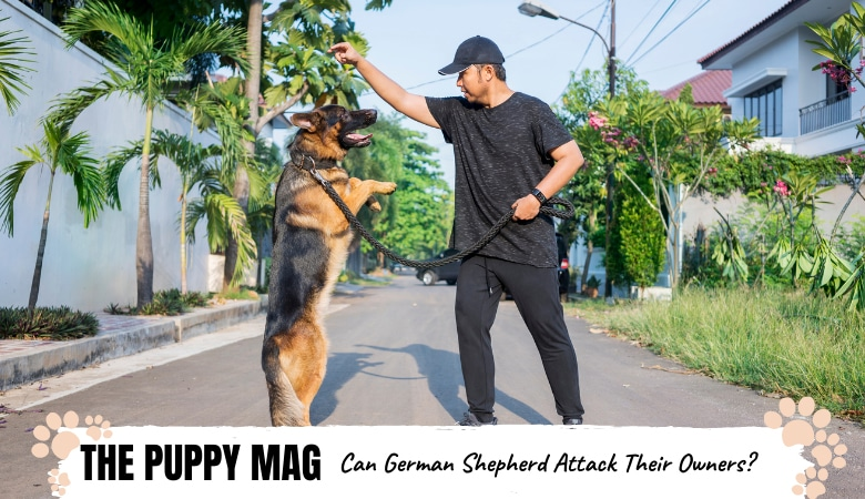Would a German Shepherd Attack Their Owner? The Truth