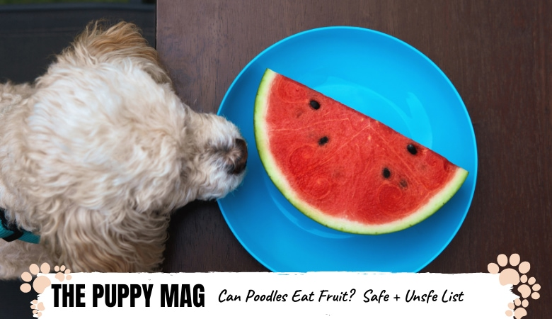 15 Fruits Poodles Can Safely Eat AND Can't Eat!