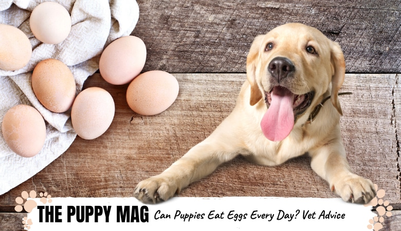 can-puppies-eat-eggs-every-day.png