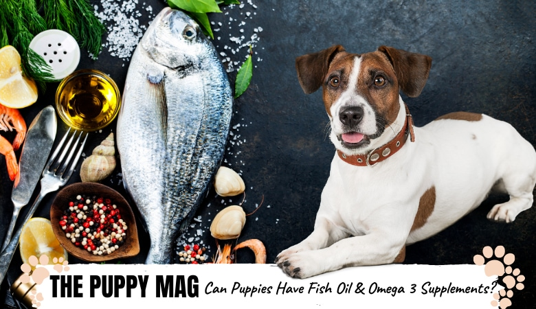 Can You Give Fish Oil & Omega 3 Supplements To Puppies?