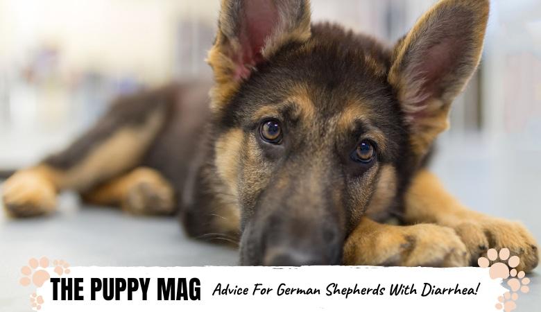 How To Help German Shepherd With Diarrhea: Causes & Fixes