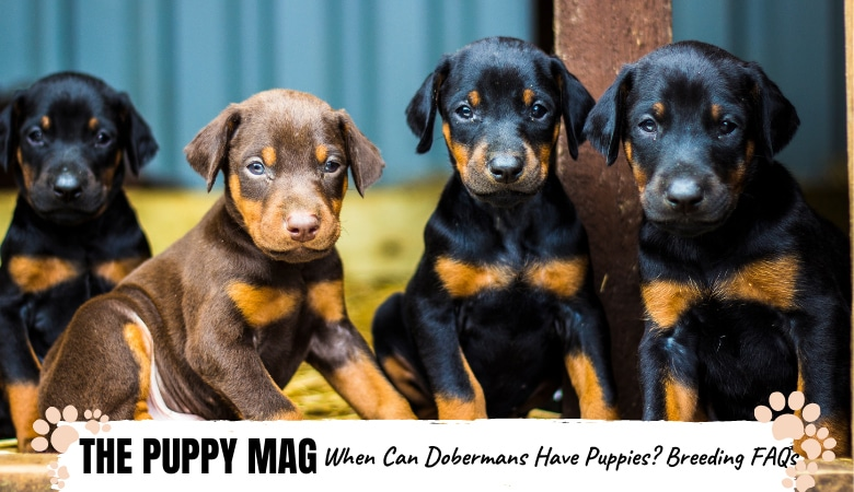 When Can Dobermans Have Puppies? Top Breeding FAQs