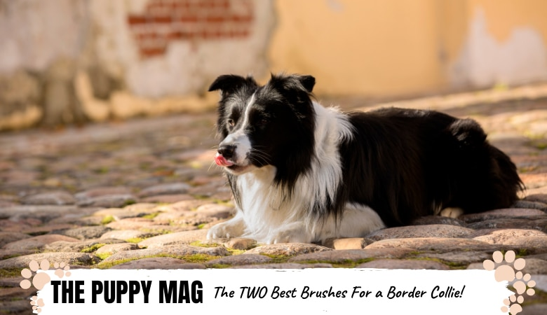 best-brushes-for-a-border-collie