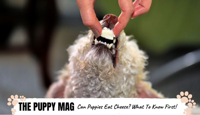 can-puppies-eat-cheese.png