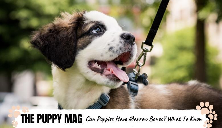 can-puppies-have-marrow-bones