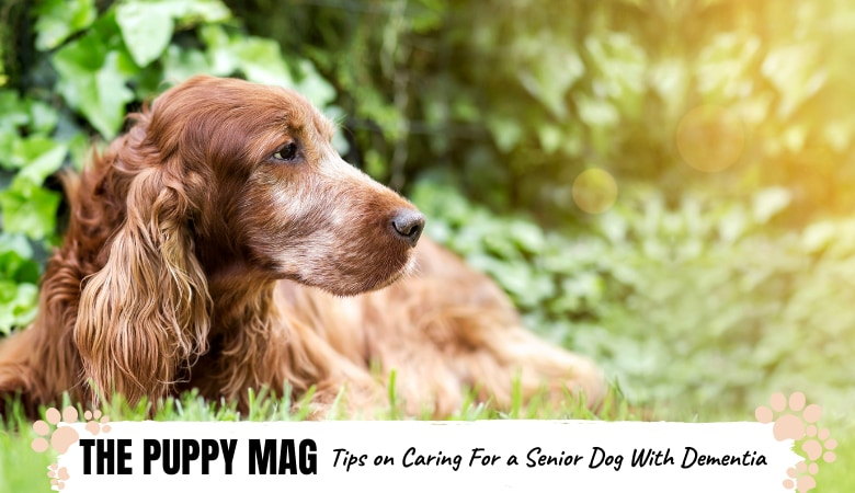 tips-on-caring-for-a-senior-dog-with-dementia