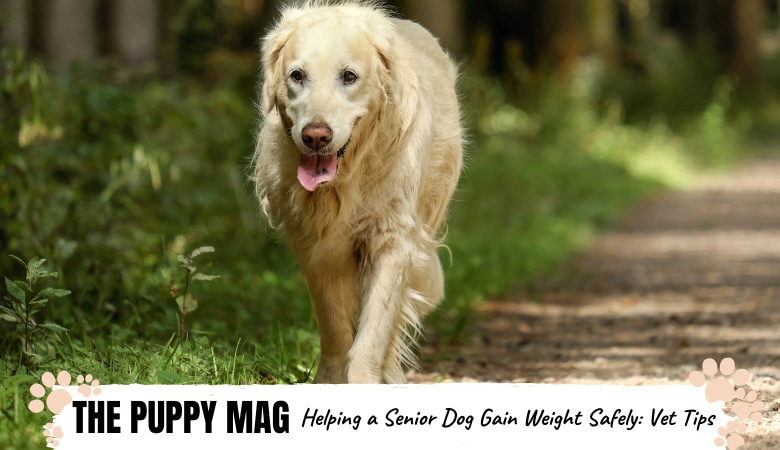 helping-a-senior-dog-gain-weight
