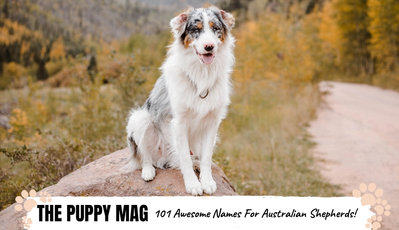 names-for-australian-shepherd