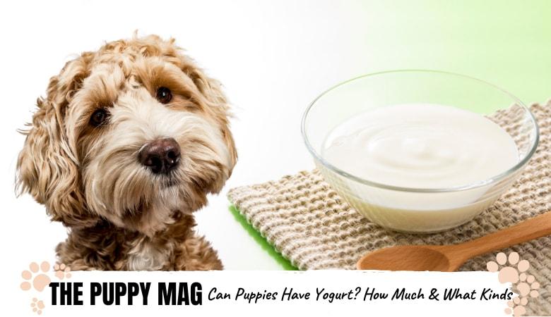 can-puppies-eat-yogurt