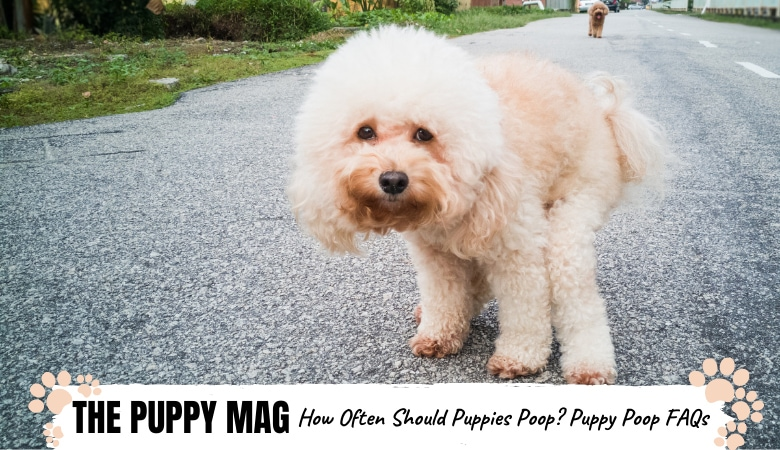 how-many-times-per-day-should-puppy-poop
