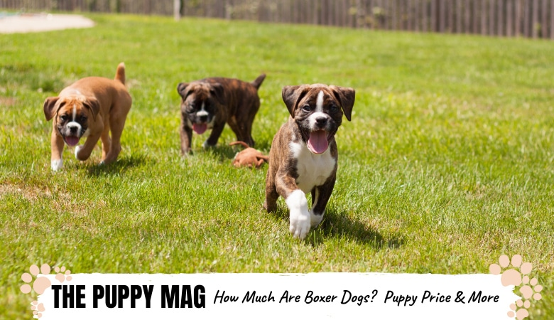 how-much-are-boxer-dogs