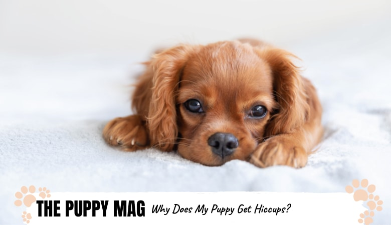 why-does-my-puppy-get-hiccups