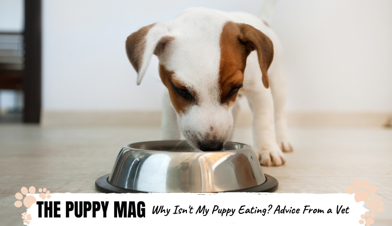 why-isnt-my-puppy-eating