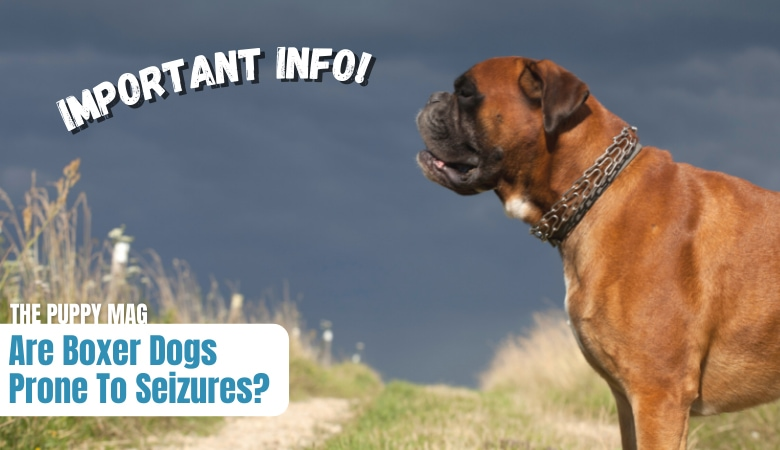 are-boxer-dogs-prone-to-seizures