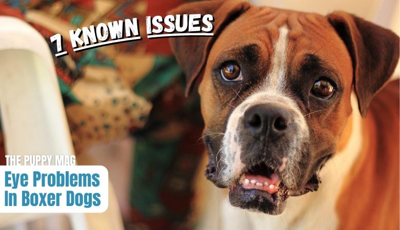 boxer-dog-eye-problems