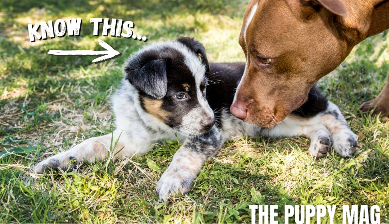 can-unvaccinated-puppies-be-around-other-dogs