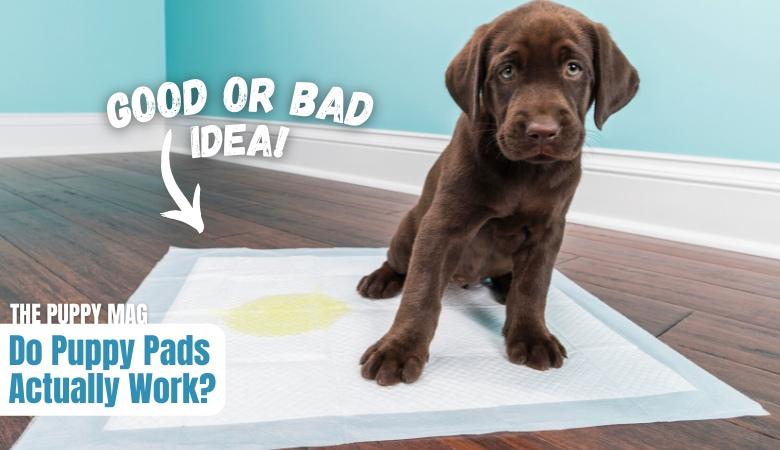 do-puppy-pads-work