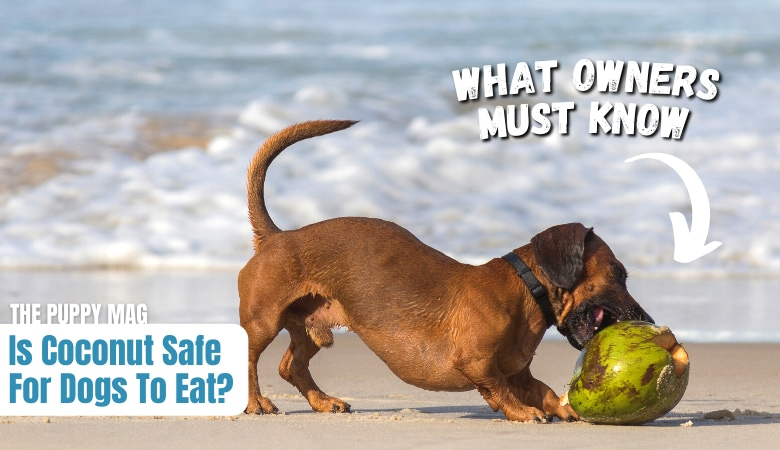 is-coconut-safe-for-dogs