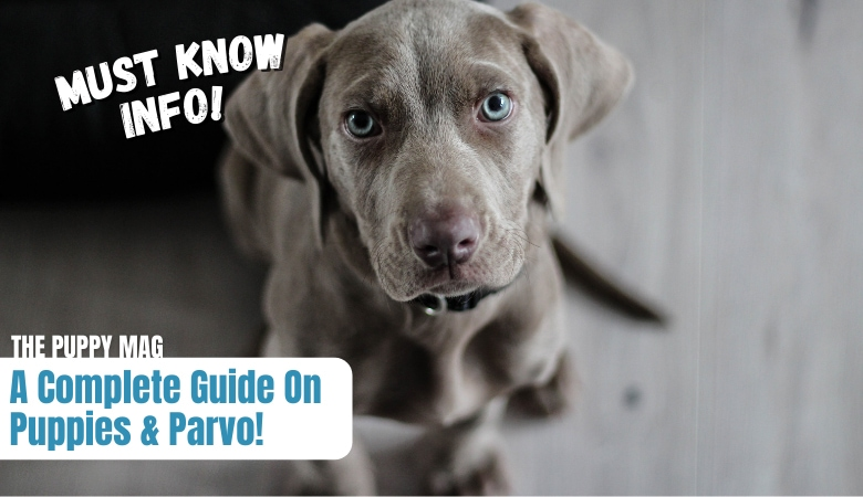 where-can-puppies-get-parvo