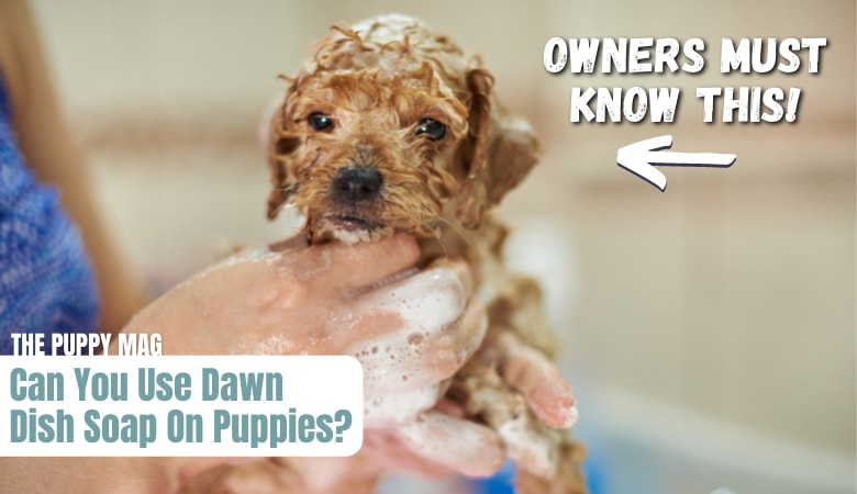 can-you-use-dawn-dish-soap-on-puppies-(1)