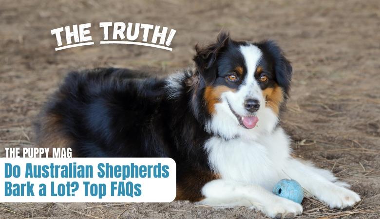 do-australian-shepherds-bark-a-lot