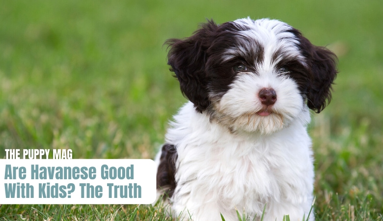 are-havanese-good-with-kids